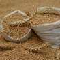 Buğday ve Bulgur