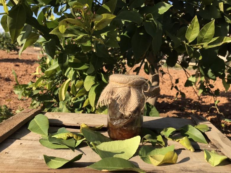 Patlıcan Reçeli 650 gr