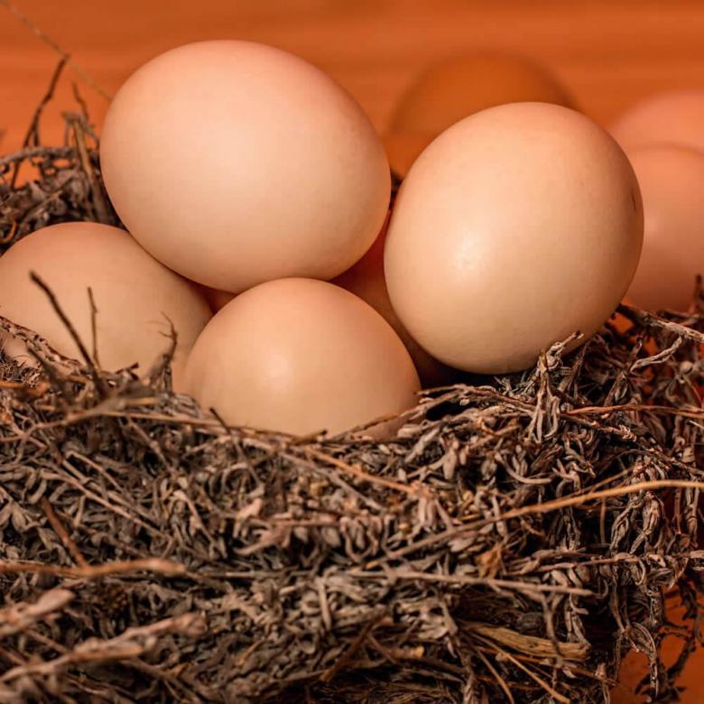 Tavuk Yumurtası 1 Adet