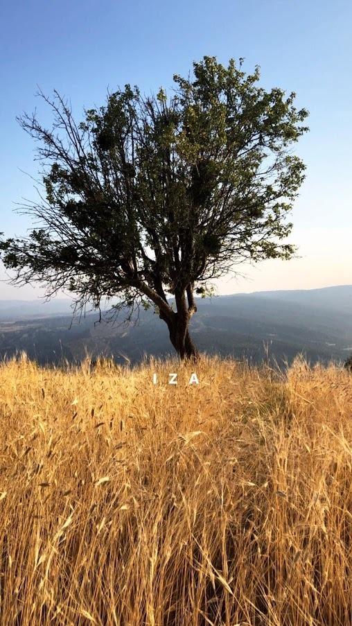 Iza Tohumluk Buğday